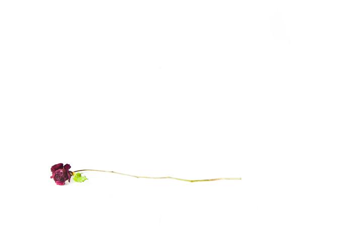 Flowers-6991.jpg