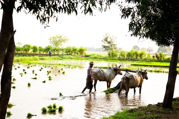 Myanmar-1416.jpg