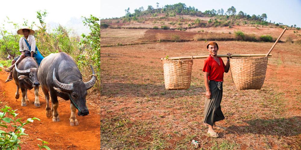 Myanmar_buffalofieldworker.jpg
