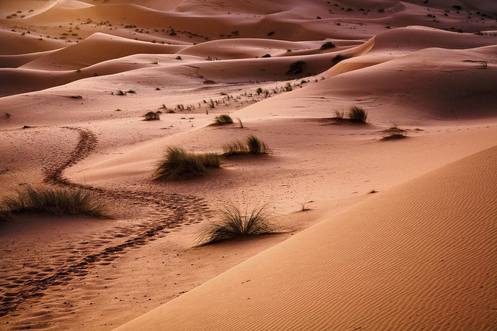 32358-1639411-2010_02_17_2010_02_19_Morocco-78.jpg