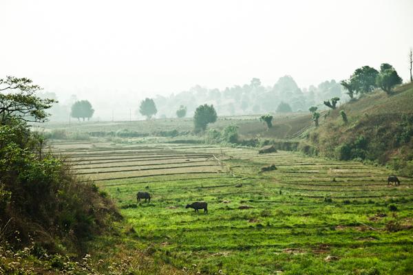 Myanmar-1520.jpg