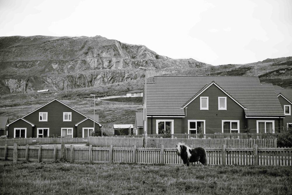 Shetland-36.jpg