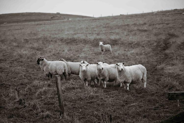 Shetland-23.jpg