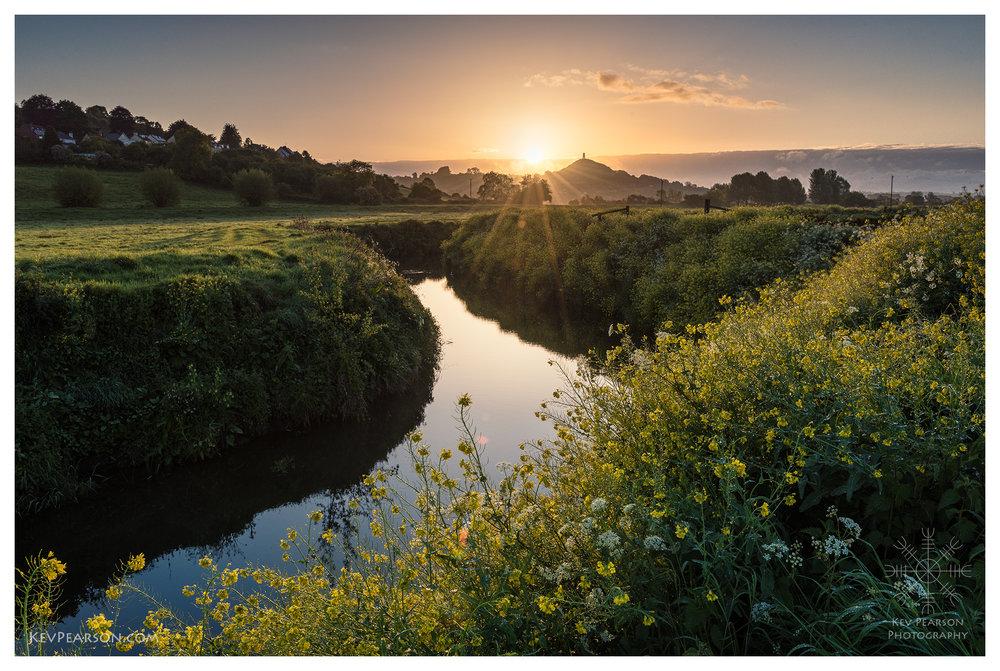 Dawn Blossoms *