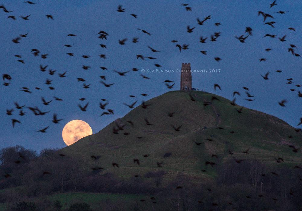 Moon and Murmuration.jpg