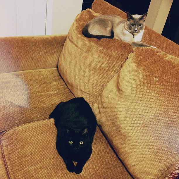 Went downstairs and saw them lounging… could it be that they're bonding? #cats