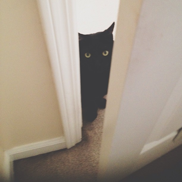 Excuse me, do you have a moment to talk about #BASTET god of the #cats?