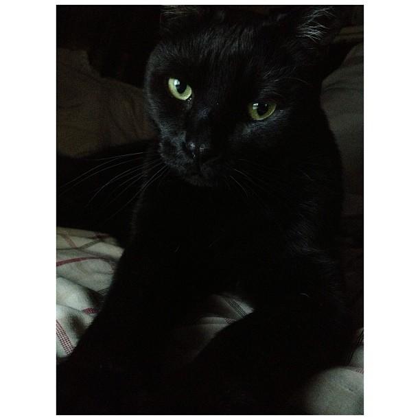 Handsome old boy #cat #blackcat