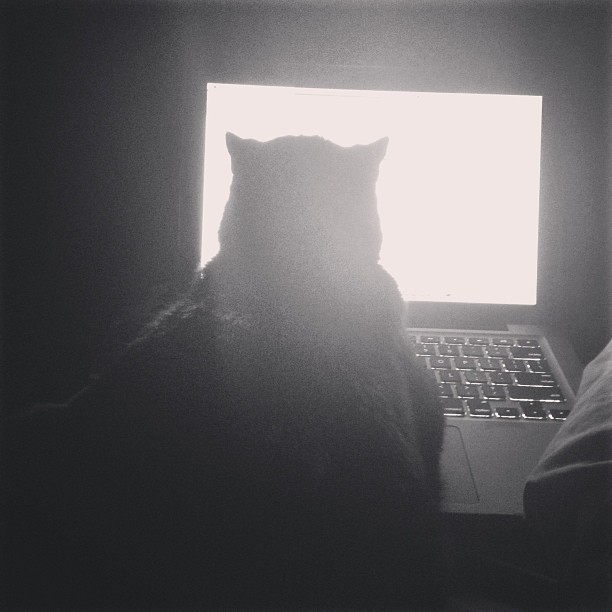 On the Internet nobody knows you're a #cat