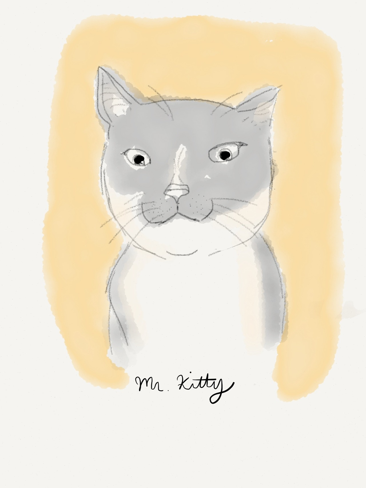 A portrait of my cat