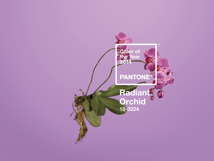 wgsn: Pantone has announced PANTONE®18-3224 Radiant Orchid as the color of the year for 2014