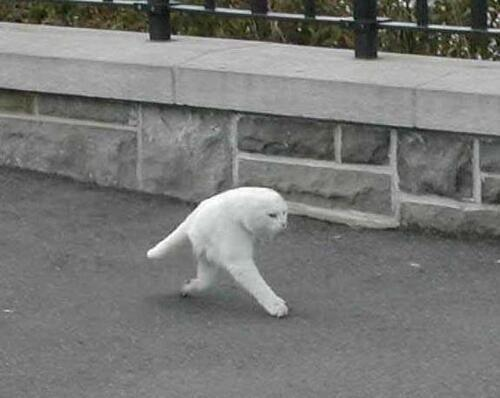 unicornology :      b0yfights :     google street view made half a cat i cant breathe   it's the fucking middle stage of an animorph     oh god
