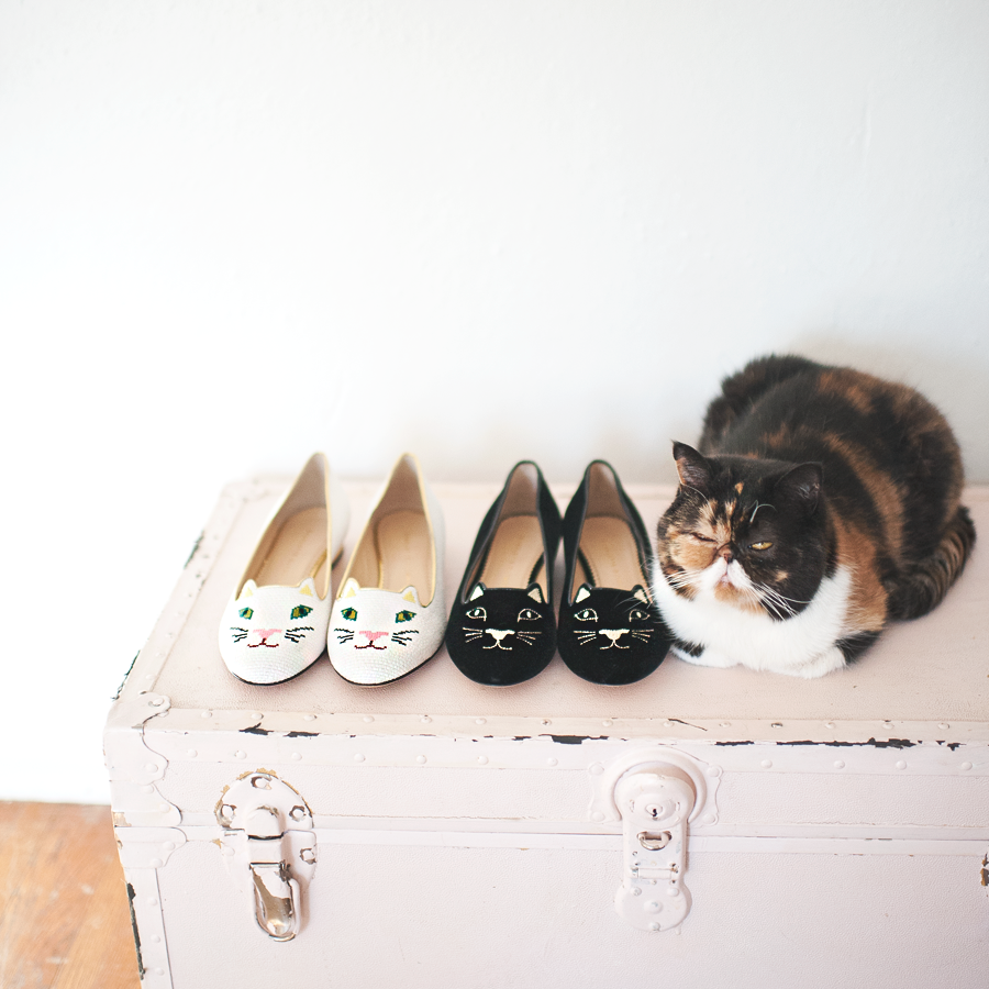 pudgethecat :     Nothing to see here. Just another pair of cat shoes…