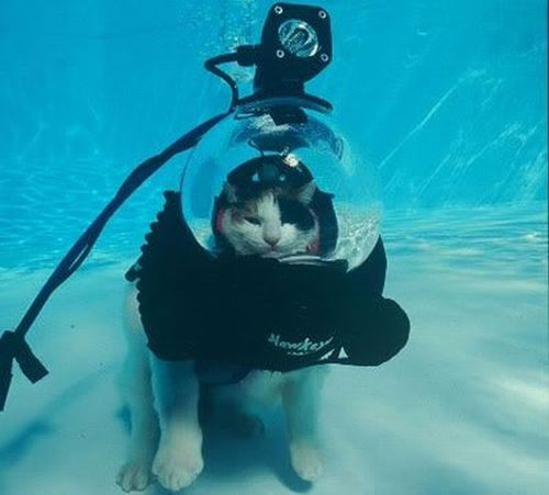 100percentcats :      scuba cat