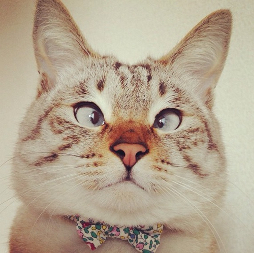 dan3lli :     Are cross eyed cats not the cutest thing ever?