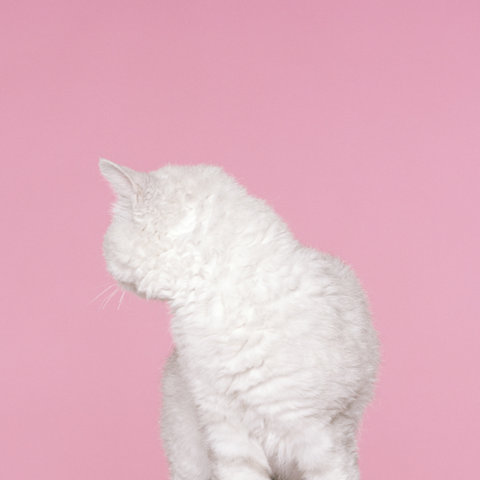 mibad :       Petrina Hicks