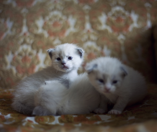 (by  Tam Tran )   my friend's cat has kittens! i have to share them to the worrrrlllddddd.