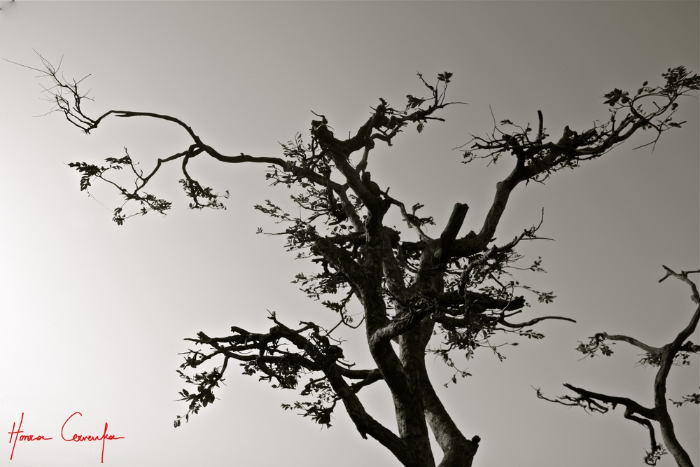 """Barren Tree"""
