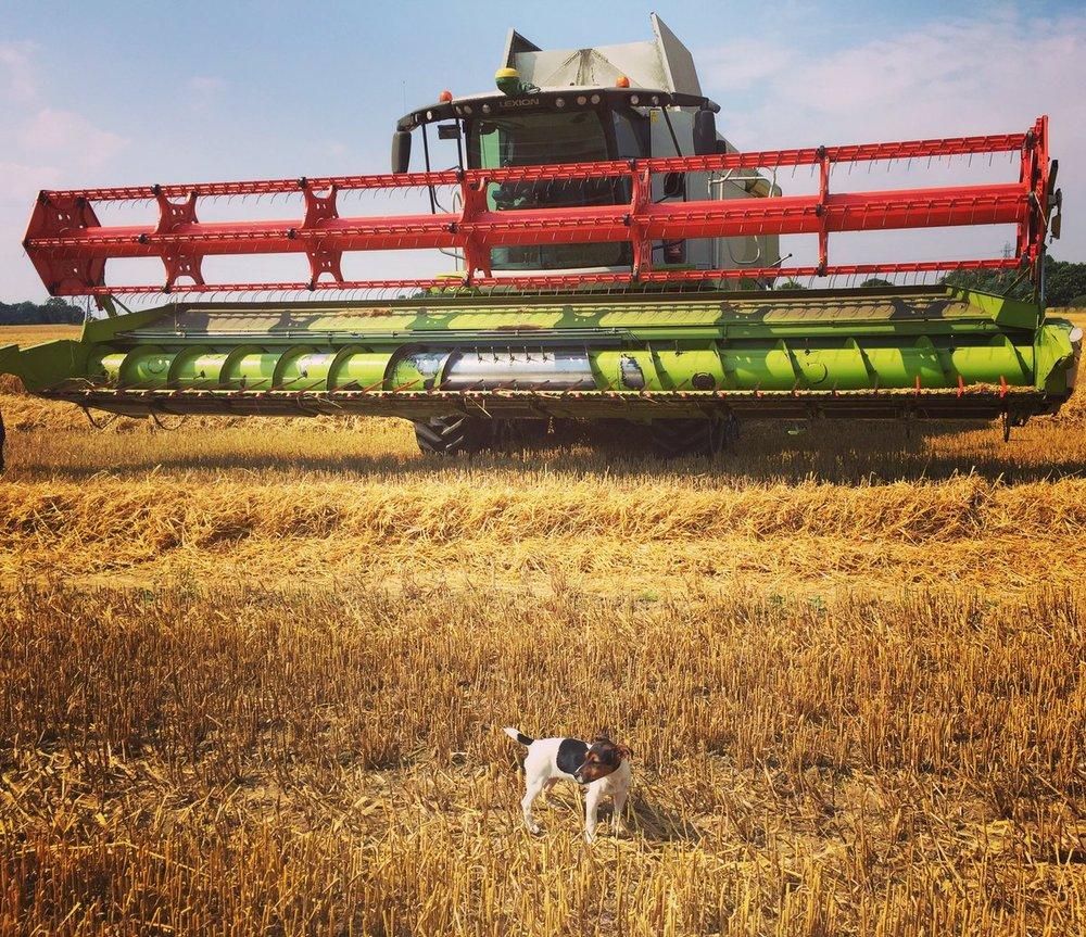 Harvest has begun on the Farm.