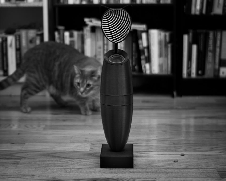 kitty_3.jpg