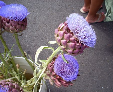 """These amazing things are artichokes that weren't picked in time for eating. Aren't they wonderful? A giant, intense blue thistle. The bees were going nuts over them."" - CraftyPod    I want to touch them."
