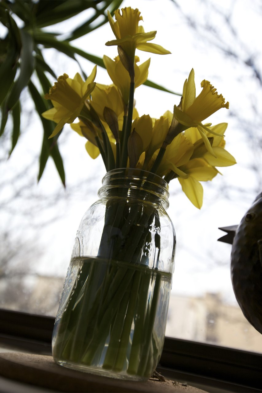 It's starting to feel like spring!  Trader Joe's has the $1.29 daffodils again, yay!