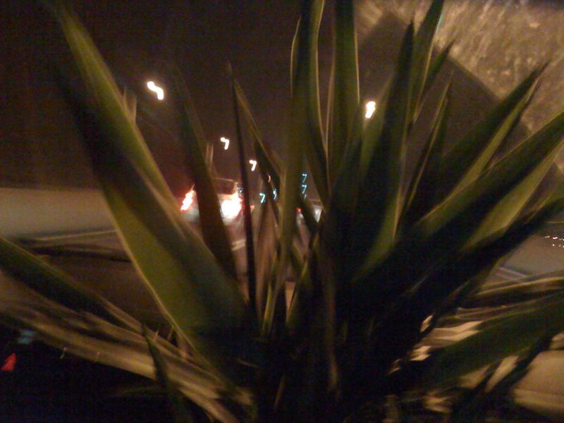 Stuck with a plant in my face driving to our new home with the last car full of stuff.