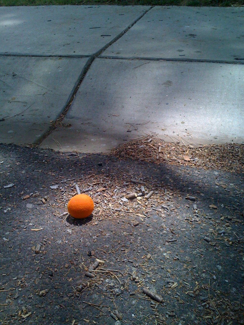 Phoenix, Arizona, where fruit then falls onto your driveway.