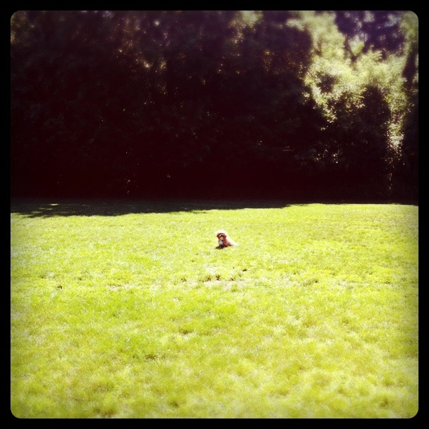 Hops in the park.   (instagramed)