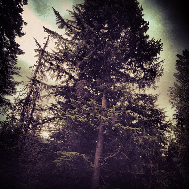 Oregon (Taken with  Instagram )