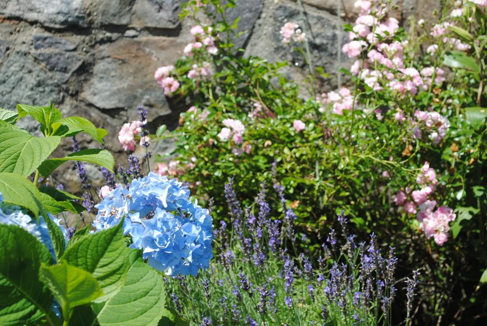 Hydrangea, Rose & Lavender