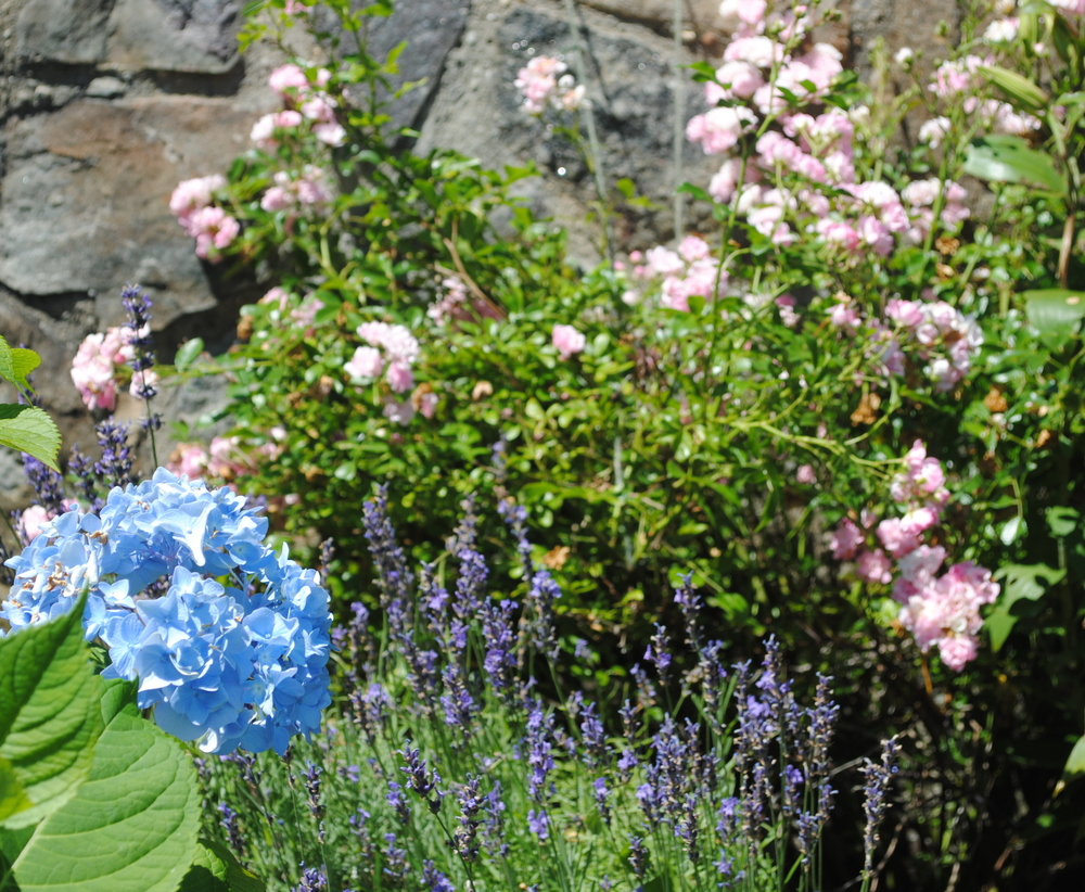 Hydrangea, Lavender & Roses