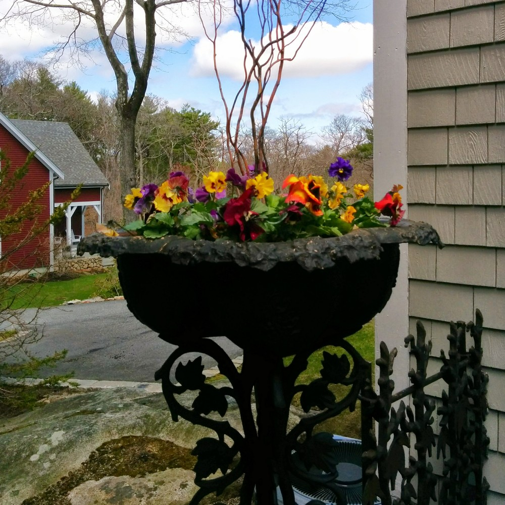Simple planter with pansies and red twig dogwood branches.