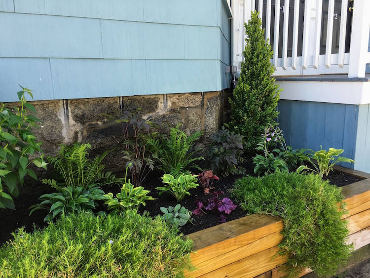 Small Urban Garden/Raised BEd
