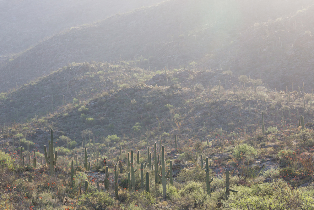 saguero_national_park_C61A5894-2.jpg