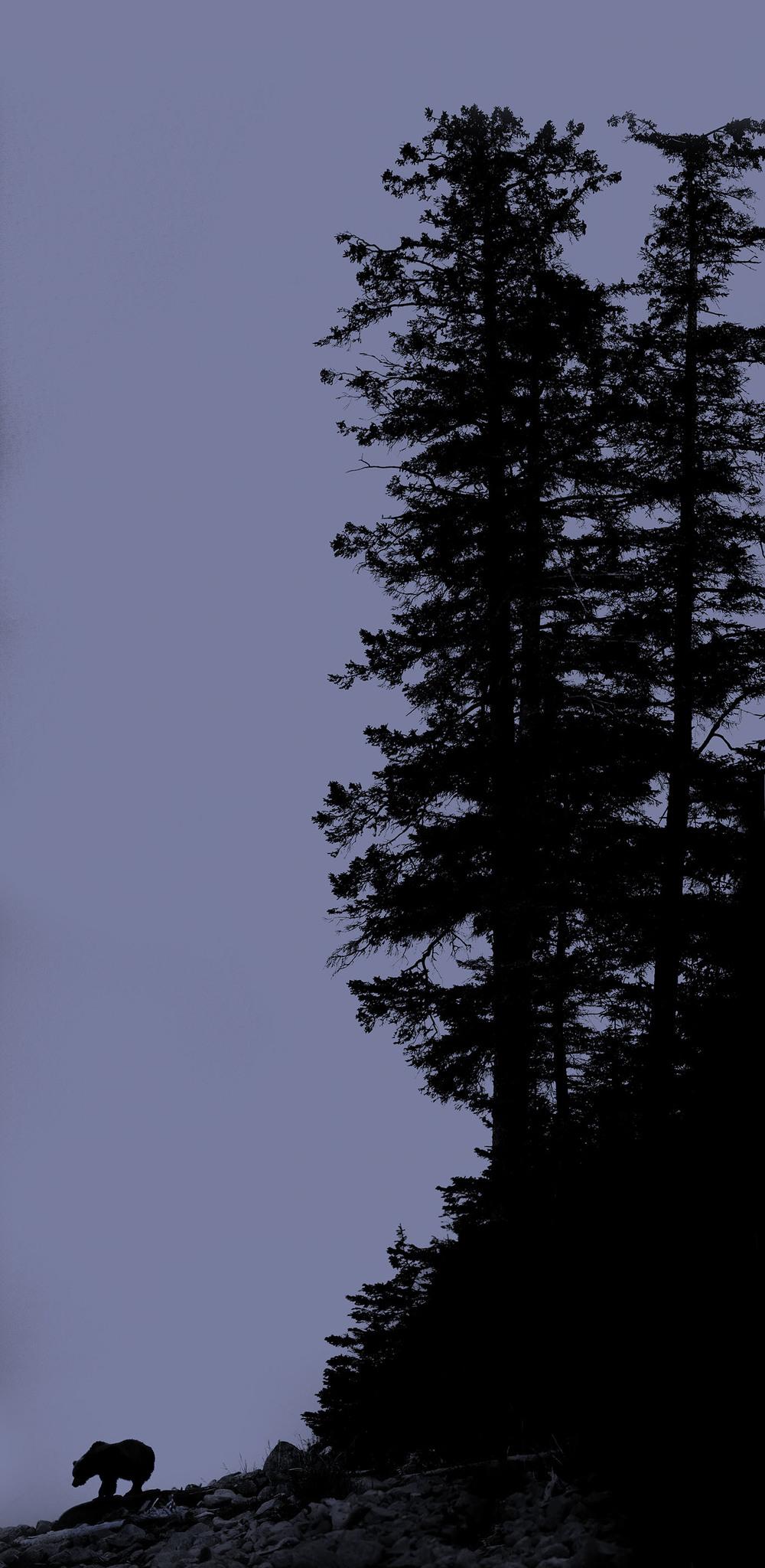 bear_tree_AG3P5044b.jpg