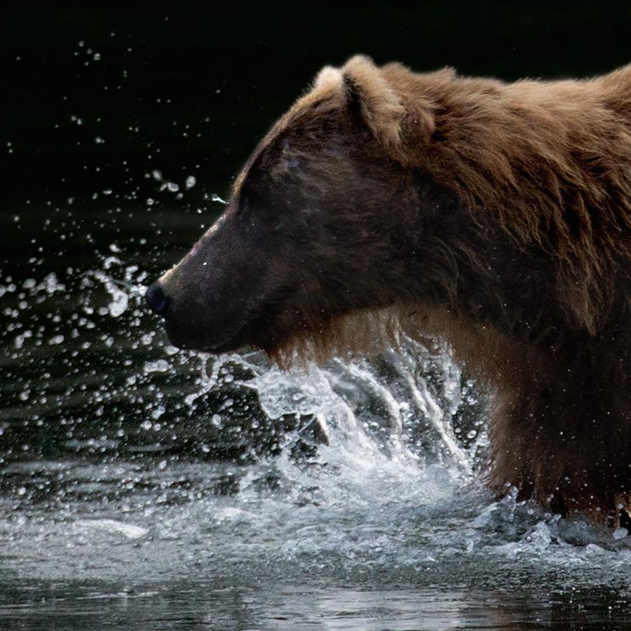 bear_icon.jpg