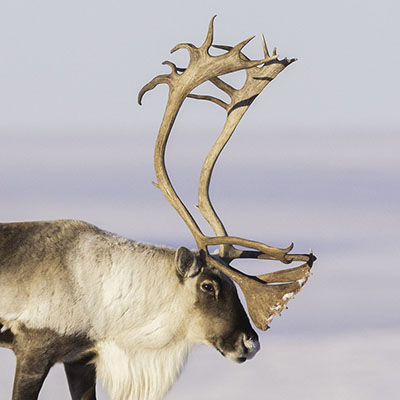 winter_wildlife_icon.jpg