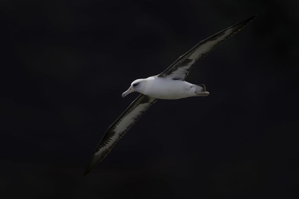albatros_AE2R1011b.jpg