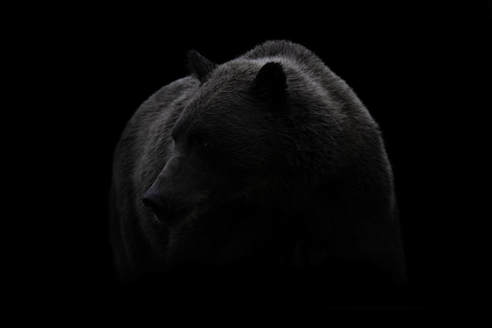 brown_bear_2L0A8889-Editb.jpg