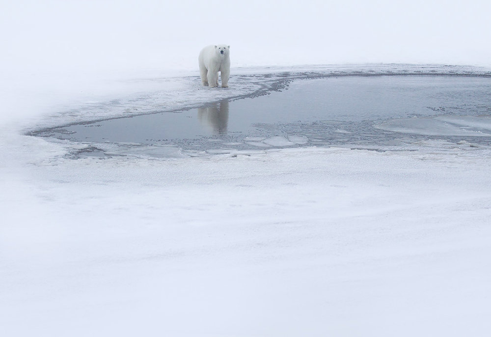 polar_bear_00450448w10.jpg