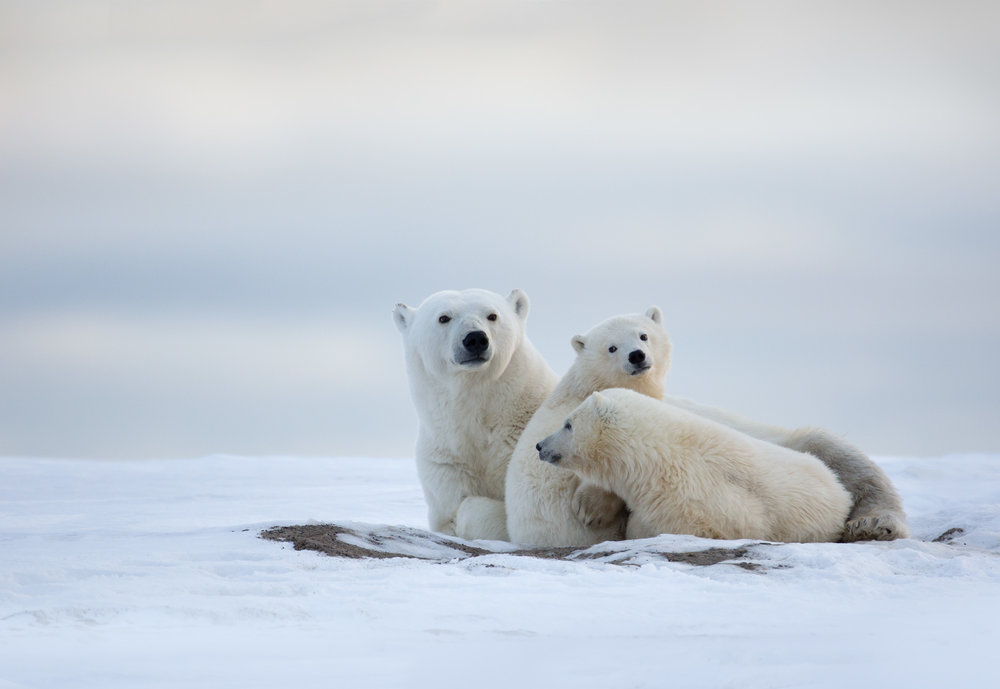 polar_bear_00500199w20.jpg