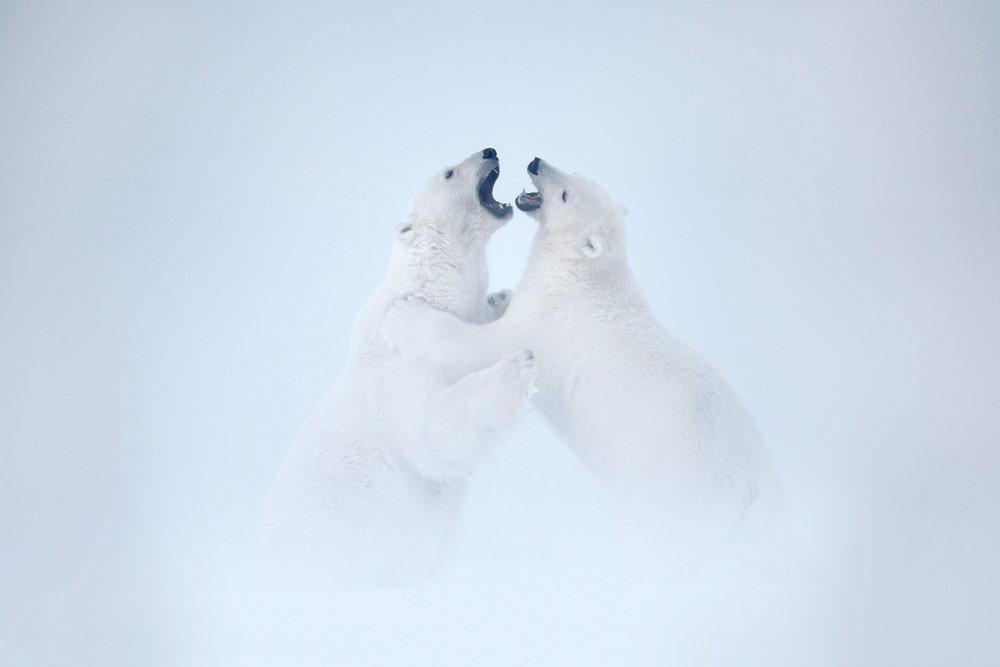North Slope - The Alaskan Arctic