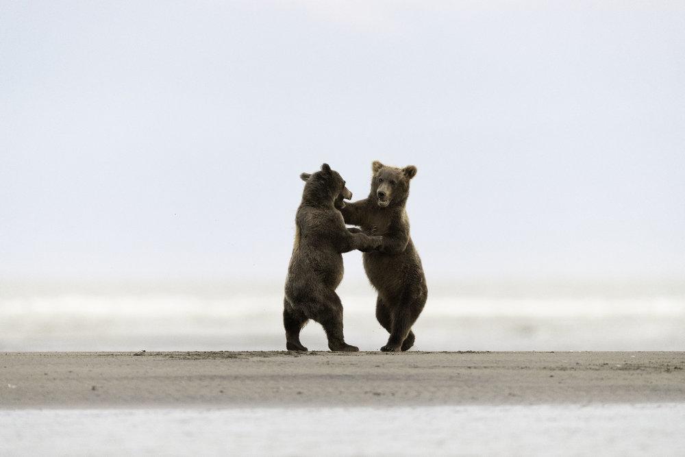 brown_bear_5770b.jpg