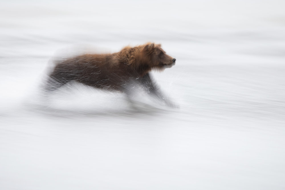 brown_bear_0236c.jpg