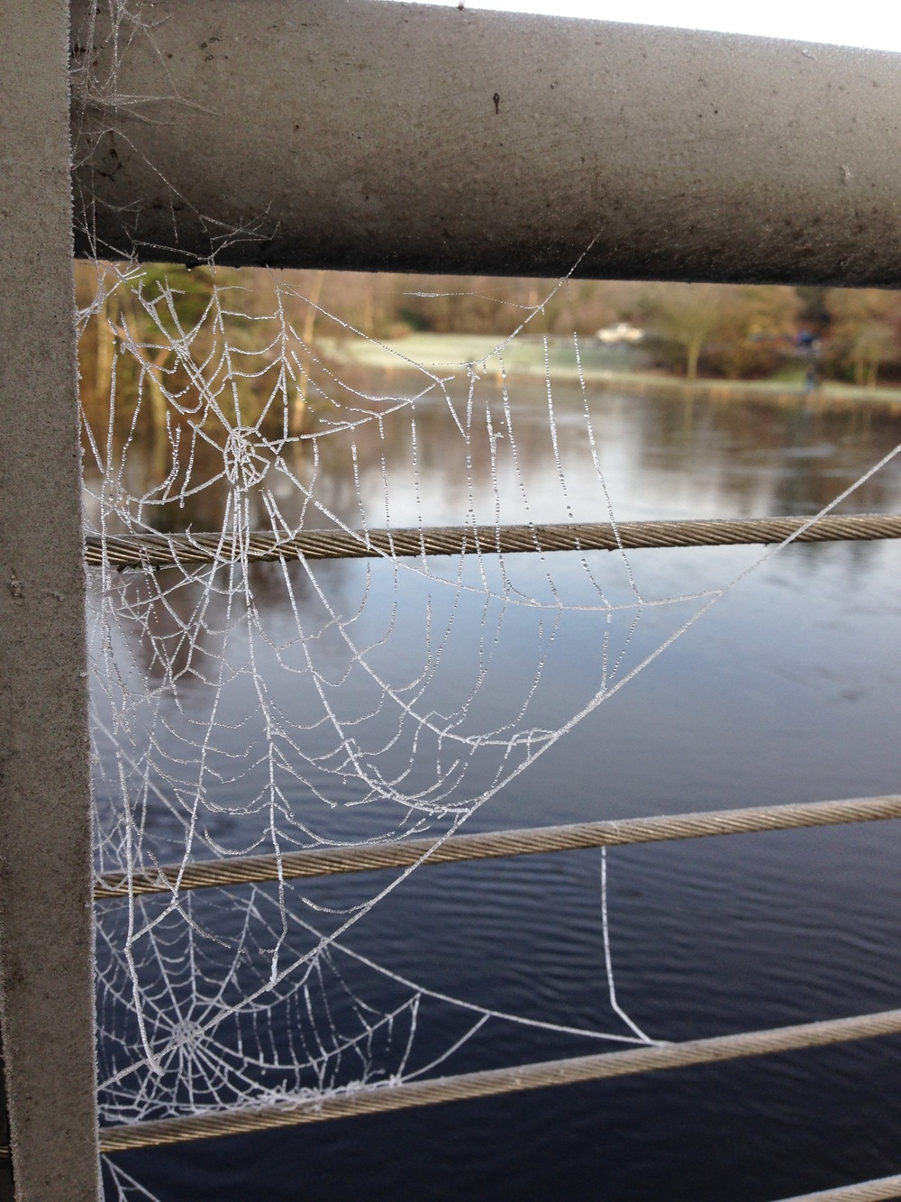even the spiderwebs froze solid