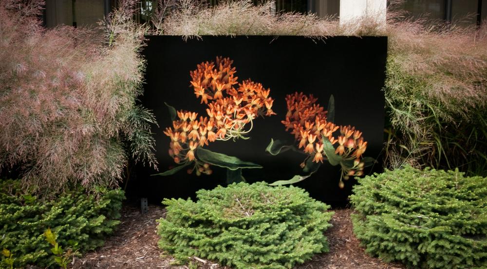butterlybush.jpg