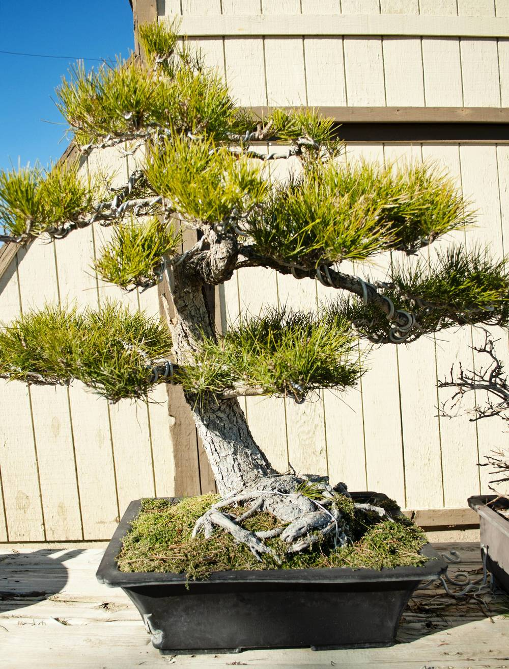 Bonsai (17).jpg