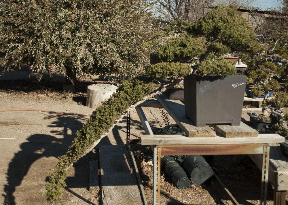 Bonsai (42).jpg