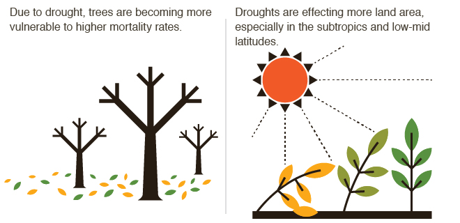 Plants and Droughts